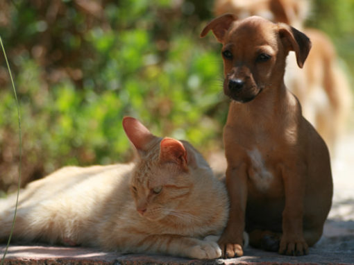 Tierheilung